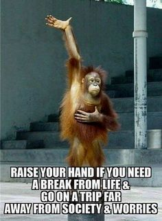 Top 60 Funny Memes And Hilarious SayingsYou can find Memes and more on our website.Top 60 Funny Memes And Hilarious Sayings Funny Animal Memes, Funny Animal Pictures, Funny Animals, Funniest Animals, Hilarious Pictures, Animal Humor, Funny Signs, Hilarious Sayings, Funny Humor