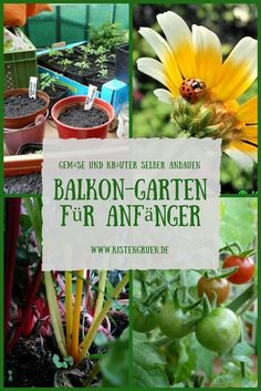 Create balcony garden for beginners: tricks for growing vegetables and herbs on . Create balcony garden for beginners: tricks for growing vegetables and herbs on the balcony Garden Types, Balcony Plants, Garden Plants, Balcony Gardening, Growing Herbs, Growing Vegetables, Gardening For Beginners, Gardening Tips, Organic Gardening