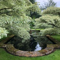 The pond with it's Cornus canopy, Rockcliffe Garden