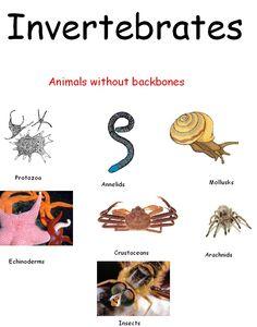 learningenglish-esl: ANIMAL GROUPING 2: VERTEBRATES & INVERTEBRATES