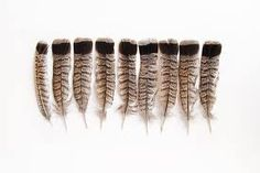 feathers - Google-søk