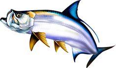 Tarpon Illustration Photoshop clipart. http://www.spiritgraphix.com/saltwater-fish-clipart/