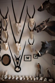 Being from South Africa, I grew up very accustomed to taxidermy and I use it a lot in my work, but I know its controversial so I also love faux trophies made from resin, paper, or ceramics. Taxidermy Decor, Taxidermy Display, Trophy Rooms, Cabinet Of Curiosities, Safari, Animal Skulls, Skull And Bones, Natural History, Antlers
