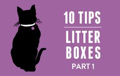 Jackson took the time to write about the issues that cats and people have with litter boxes. He has a...