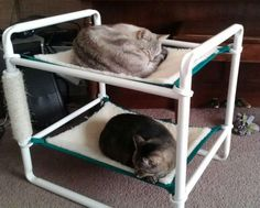 indoor cat bunk hammock. This isn't a tutorial, but I know I can figure it out using the pic as inspiration.