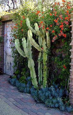 Cactus & succulents /Santa Barbara, CA Arizona Gardening, Drought Tolerant Landscape, Dry Garden, Cactus Y Suculentas, Garden Inspiration, Garden Ideas, Backyard Ideas, Cacti And Succulents, Garden Landscaping