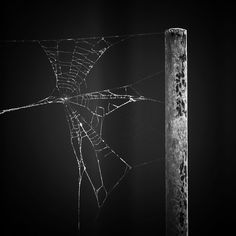 Threads by Donald Boyd #outdoorphotography #photography