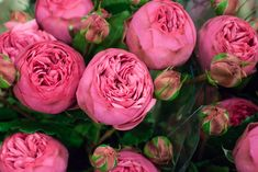 Pink Piano roses at New Covent Garden Flower Market - August 2015