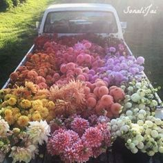 The early #Sunday morning flower run as the sun comes up! What a beautiful day to enjoy the nature? #lovesonali #beautifulflowers