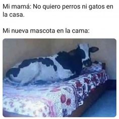 Funny Spanish Memes, Spanish Humor, Crazy Funny Memes, Wtf Funny, Hilarious, Funny Images, Funny Pictures, Curious Facts, Architecture Quotes