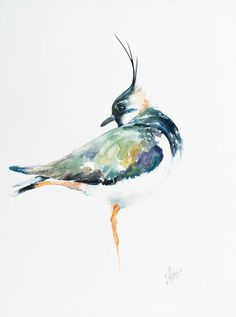 Buy Northern lapwing, Watercolour by Andrzej Rabiega on Artfinder. Discover thousands of other original paintings, prints, sculptures and photography from independent artists.