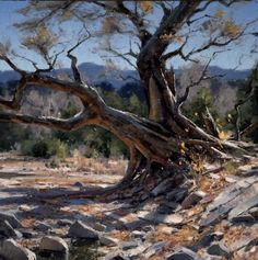 Matt Smith - Work Zoom: A Few Remaining Leaves Matt Smith, Artist Painting, Artist Art, Landscape Art, Landscape Paintings, Mesquite Tree, Mountain Paintings, Southwest Art, Paintings I Love