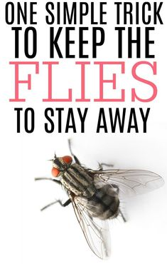 Tired of flies bugging you all day long? Try this simple and inexpensive tip to keep the flies away from both indoors and outdoors. It costs less than $.10 and is so easy to make. It really is the easiest way to keep flies away. Keep Flies Away, Get Rid Of Flies, Keep Bugs Away, Home Remedies For Flies, Fly Remedies, Fly Deterrent, Fly Repellant, Flys In The House, Flies Repellent Outdoor