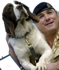 An English Springer Spaniel Served Five Tours of Duty in Afghanistan