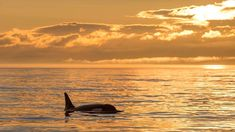 Experience the best Victoria Whale Watching & Wildlife adventure with Eagle Wing Tours, see Vancouver Island from our safe, high-performance, luxury boats. Eagle Wings, Wings Tour, Whale Watching, Vancouver Island, Wildlife, Victoria, Boat, Tours, Adventure