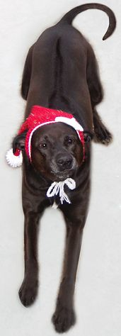 Ravelry: Stocking Cap for Christmas pattern by A Dog In A Sweater -- free pattern