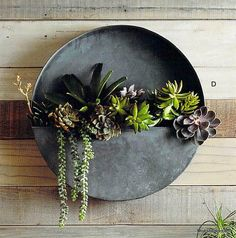 Roost Orbea Zinc Circle Planters are made from galvanized iron with an aged zinc finish. Perfect for succulents and small plants, these full and half-circle wall planters are both rustic and original. Hanging Wall Vase, Wall Mounted Planters, Metal Wall Planters, Hanging Plants, Planter Pots, Zinc Planters, Succulent Wall Planter, Galvanized Wall Planter, Rustic Planters