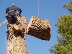 They also know what'sthe basic needs of the tree are and how to takecare of the tree. They would advisethe clients to abstain tree topping and provide other substitutes. Always employ the services of well-informed contractors to avoid the chance of mishaps and injuries.