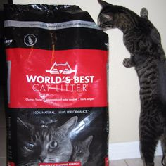 #worldsbestcat  Eve loves your litter so much she likes to smell it when a new bag gets opened....she never did that with any other brand!!