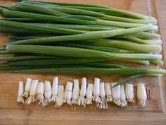 "Who knew!! - you can trim 1"" off the bottom of your Scallions & grow new plants instead of buying bulbs ( my store bought bulbs were a disaster this summer :( ...so I will definitely be trying this in my kitchen window this winter )"