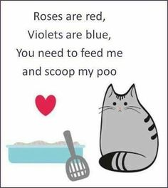 A Poem For You Funny Cats, Funny Animals, Cute Animals, Cats Humor, Funny Horses, Crazy Cat Lady, Crazy Cats, Kitten Baby, Beautiful Cats