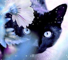 Black kitten in flowers! The Galaxy S4 Wallpaper I just pinned!