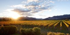 Autumn sunset behind Vintners Retreat. Copyright Paul Jones