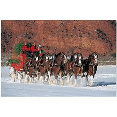Bring the good times of the bar, tailgate or BBQ into your home with this Officially Licensed Budweiser canvas print. Whether its game day of having your friends and family over for a few laughs, this Big Horses, Pretty Horses, Horse Love, Beautiful Horses, Animals Beautiful, Work Horses, Christmas Horses, Winter Christmas, Christmas Time