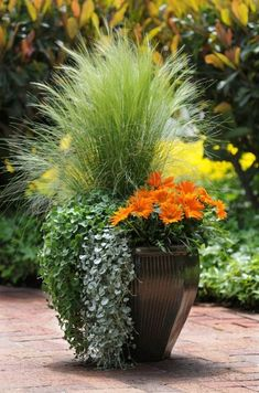 Container Gardening Ideas Orange Surprise, by Ball Horticultural Container Size: 14 inches, Exposure: Sun New Day™ Clear Orange gazania Emerald Falls dichondra Silver Falls™ dichondra Pony Tails Mexican feather grass Fall Planters, Garden Planters, Balcony Garden, Flowers In Planters, Large Garden Pots, Small Space Gardening, Gardening Tips, Organic Gardening, Vegetable Gardening