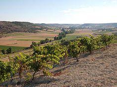 El valle del Esgueva y sus vinos.