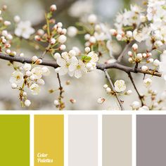 aubergine and yellow colors, beige color, brown color, color palette for spring, cream color, cream-gray color, gray color, lime color