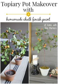 Topiary Pot Makeover-homemade chalk finish paint http://athomewiththebarkers.com/topiary-pot-makeover/