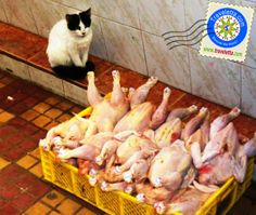 Cat in the souk, Tangier, morocco