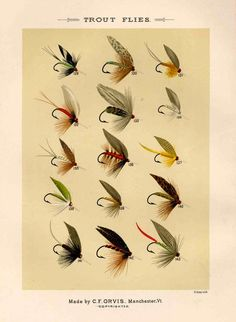 trout flies glorious fly fishing print no 1 by EPHEMERApress