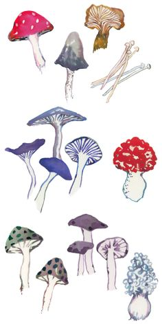 HAPPY MENOCAL SHROOM NOTECARDS