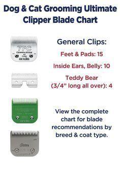f0729408c Dog grooming clipper Material Do Cão, Dicas, Tosa De Cães, Schnauzer  Aliciamento,