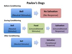 Classical Conditioning- a simple form of learning in which one stimulus comes to bring forth the response usually brought forth by a second stimulus by being paired repeatedly with the second stimulus.