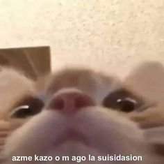 Cute Cat Memes, Cute Love Memes, Funny Dog Memes, Cartoon Memes, Stupid Memes, Dankest Memes, Meme Pictures, Reaction Pictures, Animal Memes