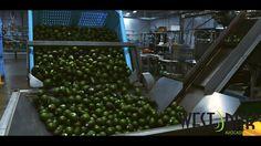 Ensure maximum #Avocado category performance with #WestPak in 2016 https://video.buffer.com/v/56843f2b04d15817762ab9a0