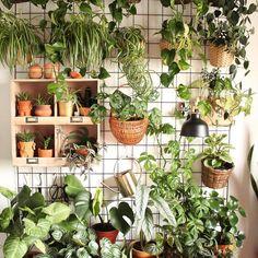 10 fantastische Pflanzenregale Mod and Mint - Deborah Green Room With Plants, House Plants Decor, Plant Decor, Plant Rooms, Plant Wall Diy, Bedroom Plants, Hanging Plants, Indoor Plants, Indoor Plant Wall