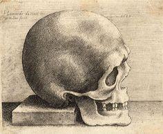 Wenceslaus Hollar Skulls reproductions of Leonardo da Vinci Crane, Real Human Skull, Joseph Pulitzer, Dance Of Death, Danse Macabre, Vanitas, Skull And Bones, Skull Art, Skull Decor