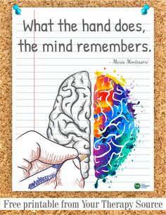 Do you ever stop to think about the benefits of writing by hand? Are students and adults losing out on the benefits of writing by hand due to technology? What the hand does, the mind remembers. Brain Based Learning, Learning Theory, Learning To Write, Hand Quotes, Psychological Science, Pediatric Occupational Therapy, Educational Psychology, Psychology Quotes, Color Psychology
