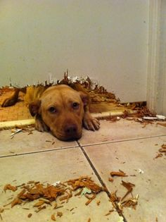Mommy & Daddy went to lunch with grandma and grandpa, so I ate grandmas door. Think I left a great first impression!