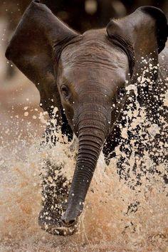 Elephant baby splashing in the water