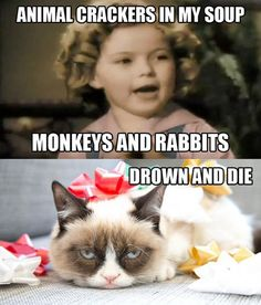 Grumpy cat I'm at your level today..