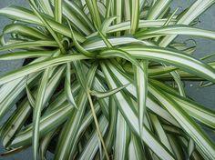 Inquinamento domestico: 15 piante da appartamento che depurano l'aria della casa