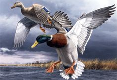 ducks art | The Federal Duck Stamp Program: U.S. Fish and Wildlife Service