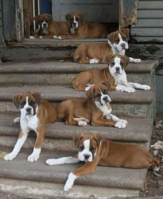 """We're climbing the stairway to heaven."" (boxer)"