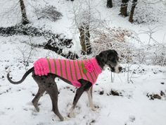 Girly Sweaters for Big Dogs! Finally!