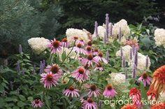 Ogrodnik Mimo Woli cd - strona 2800 - Forum ogrodnicze - Ogrodowisko